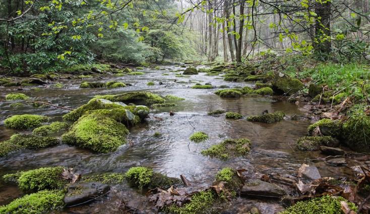 Bob Drzyzgula enjoys photographing Big Run State Park in western Maryland. Here the Big Run stream flows northwest.