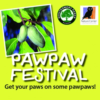 primary-Pawpaw-Festival-at-Meadowside-Nature-Center-1471794687