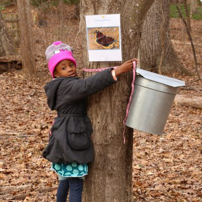 primary-Maple-Sugaring-Days-1484750428