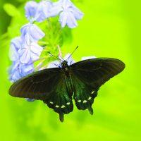 Wings of Fancy Live Butterfly & Caterpillar Ex...