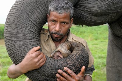 "A mahout, hired by the government to train wild elephants, is part of the story told by Thomas Grant and D.K. Bhaskar in their documentary, ""Elephants in the Coffee."" The 60-minute India-made film will be screened at 8 p.m. Sept. 9."
