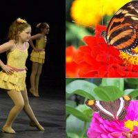 Ballerinas and Butterflies Exhibit