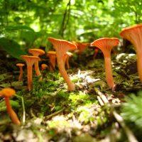 Fall Mushroom Tasting