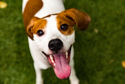 Yappy Hour & Pop-Up Dog Park with Live Music