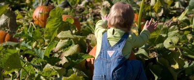 Butler's Orchard in Germantown is holding its 37th Annual Pumpkin Festival on weekends through Oct. 29.