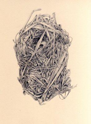 """""""Marsh Wren"""" by Kandy Phillips"""