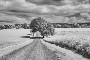 The World in Infrared: Landscapes by Sheila Galagan