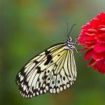 Wings of Fancy Live Butterfly & Caterpillar Exhibit