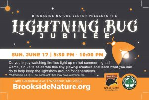 Lightning Bug Jubilee