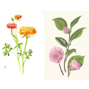 Inside the Garden Walls: Botanical Art by Anne Clippinger and Joan Ducore