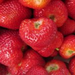 37th Annual Strawberry Festival