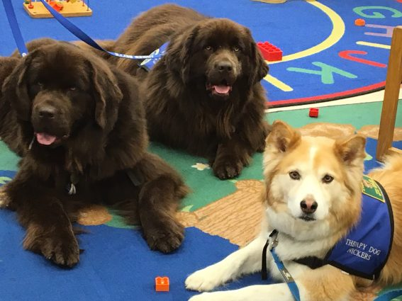 Bark Club: Check out these three dogs, working as volunteers at the Aspen Hill Library.
