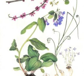 All Nature Is But Art: Botanical Art Society of the National Capital Region