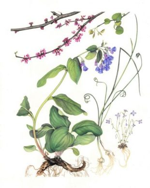 All Nature Is But Art: Botanical Art Society of th...