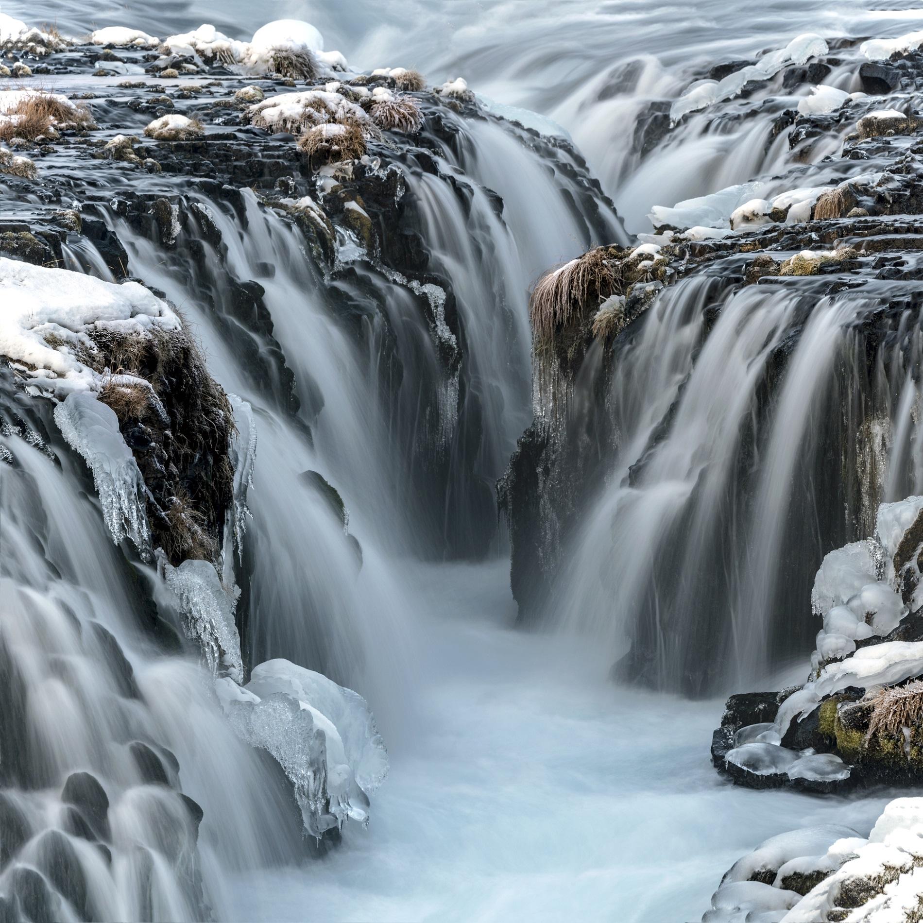 """Arctic Flowers, Bruarfoss, Iceland"""