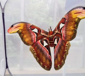 Nature Matters: Moths and their Adaptations (CANCELED)