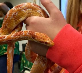 Nature Matters: For Goodness Snakes
