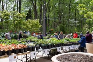 Native Plant Sale (Cancelled)