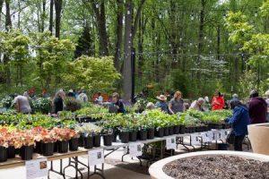 Spring Plant Sale