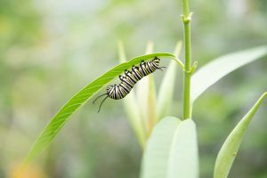 Common Garden Pests & Diseases Virtual Program...
