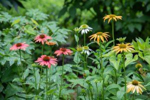 The Recycled Garden Virtual Program