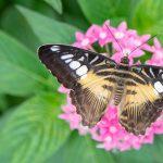 Care & Handling of Butterflies in Your Garden ...