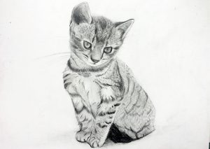Pet Portriats