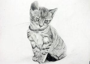 *ONLINE* Pet Portraits Workshop