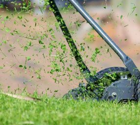 How to Cultivate an Organic Lawn