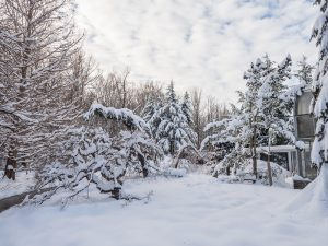 Virtual Camp: Winter Indoors and out Camp