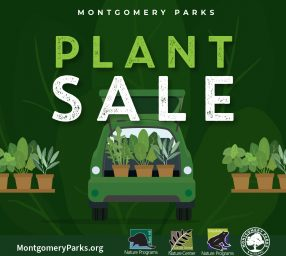 Plant Sale at Locust Grove Nature Center