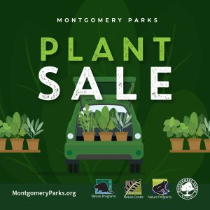 Friends of Black Hill Nature Programs Online Native Plant Sale
