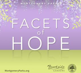 Facets of Hope Exhibit at Brookside Gardens