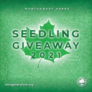 Tree Seedling Giveaway