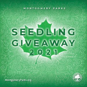 Tree Seedling Giveaway at Olney Manor Recreational Park