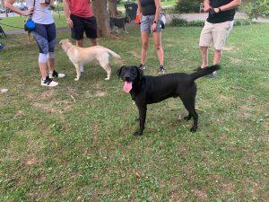 Yappy Hour & Pop Up Dog Park